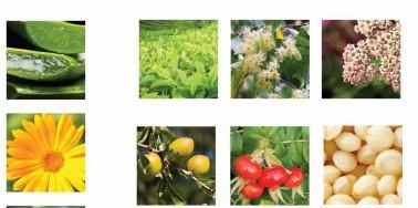 KJ PlantPics-1